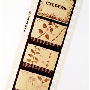 Стебель - диафильм по ботанике