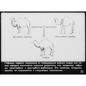 Генетика в животноводстве