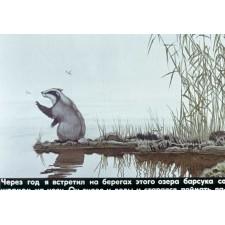 Барсучий нос. Диафильм по рассказу К. Паустовского