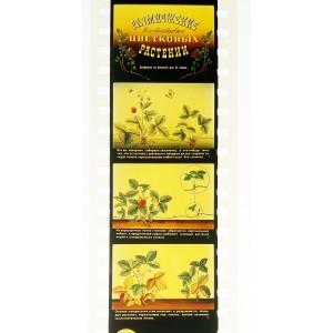 Размножение (вегетативное) цветковых растений