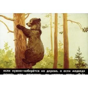 Звери наших лесов